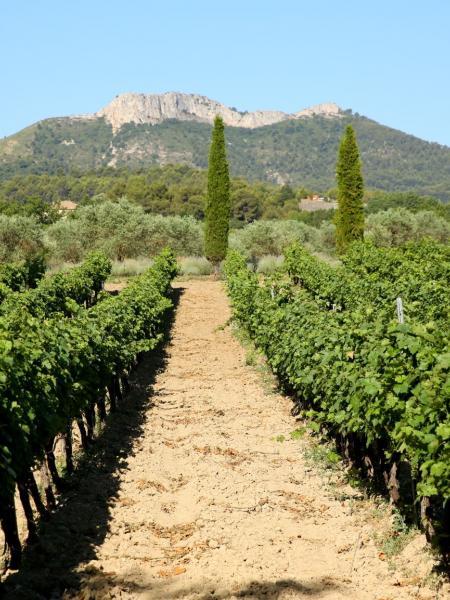 Découverte méthode de fabrication du vin